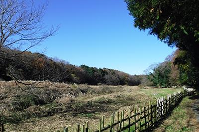 遠藤笹窪谷(遠藤健康の森)