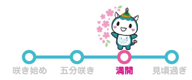 ふじきゅんの開花情報