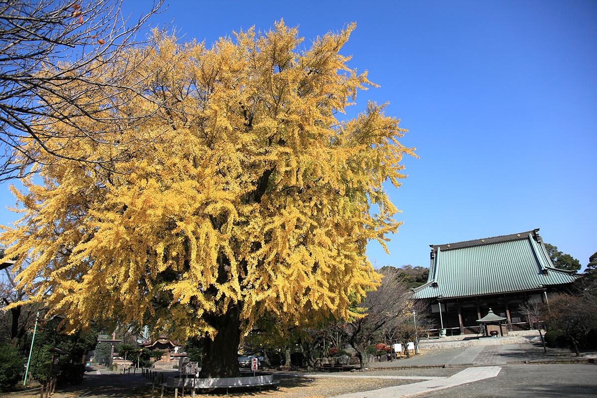 遊行寺 (清浄光寺)