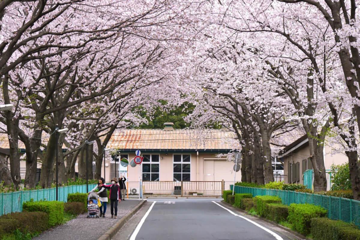 日本大学生物資源学部(博物館、付属バラ園、桜並木)