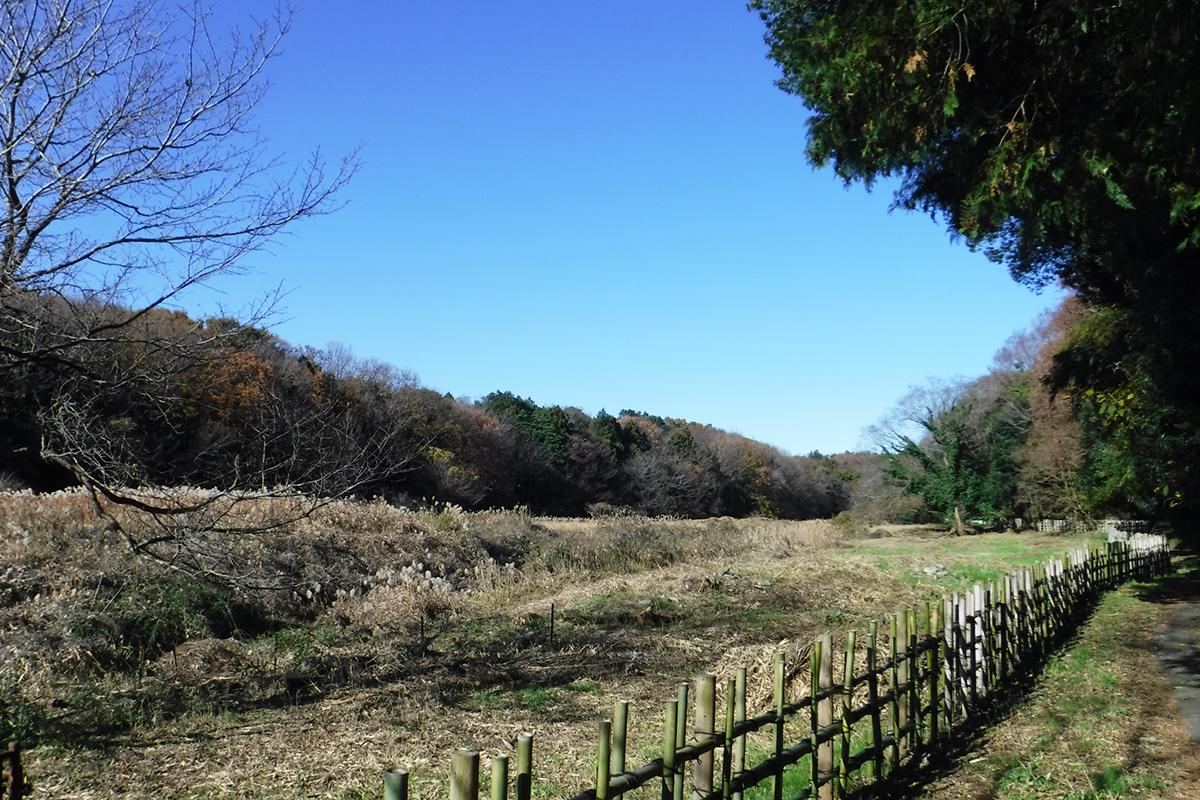 遠藤健康の森