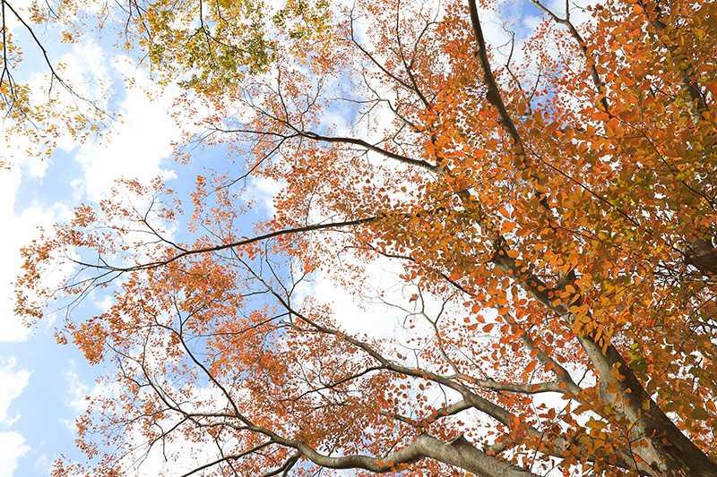 新林公園の紅葉